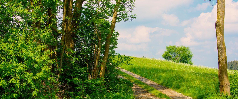 Grüne Landschaften in Müritz