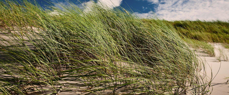 Dünen im Wind an der Ostsee