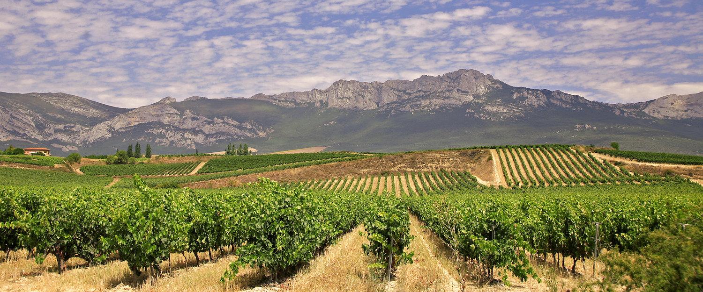 Viñedos y las montañas alrededor de Laguardia