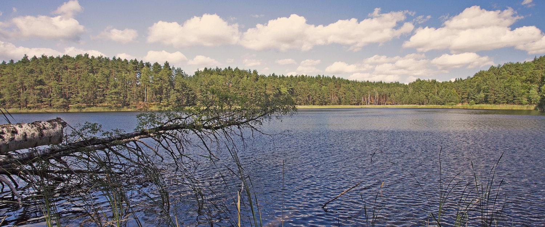 Bory Tucholskie to także liczne jeziora
