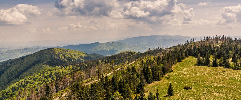 Liczne tereny leśne w Pieninach
