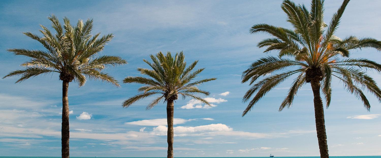 Palmbomen voor de blauwe lucht