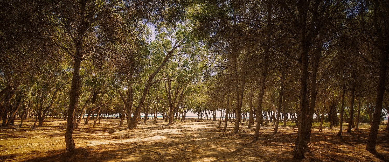 Bosque junto a la playa en Vera