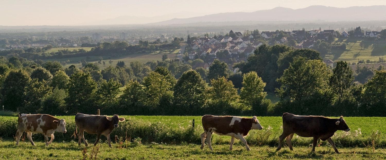 Idyllisches Ambiente im Breisgau
