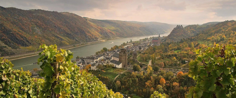 Blick von einem Weingebiet auf den Rhein