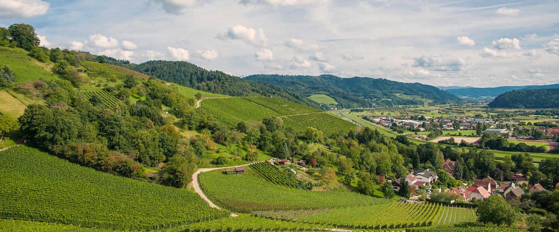 Weinberge in Gengenbach