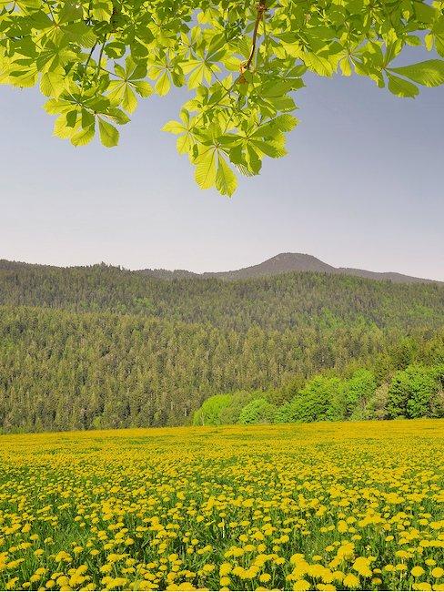 Der Bayerische Wald hält viele Freizeitmöglichkeiten parat!