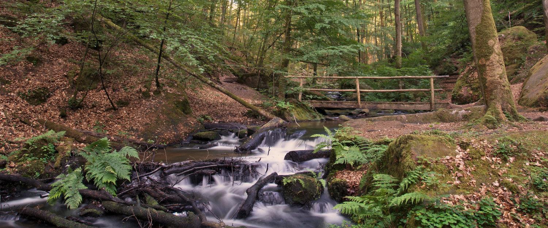 Bossen en bovenloop in Bad Bergzabern