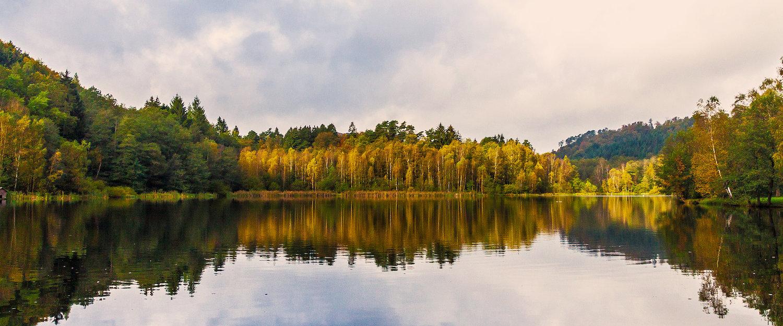 Zomer aan het meer in de Pfalz