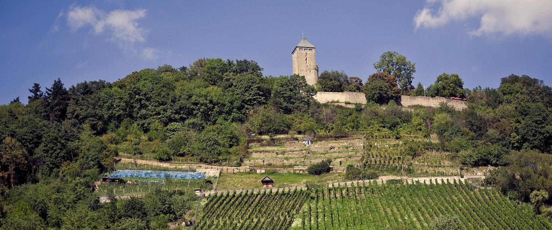Schlossberg mit der Starkenburg bei Heppenheim