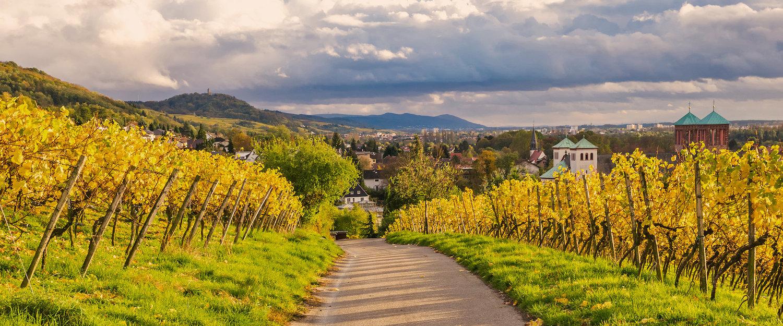 Das idyllische Weinbaugebiet Hessische Bergstraße