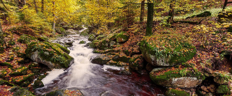 Idyllische Natur in Bad Lauterberg