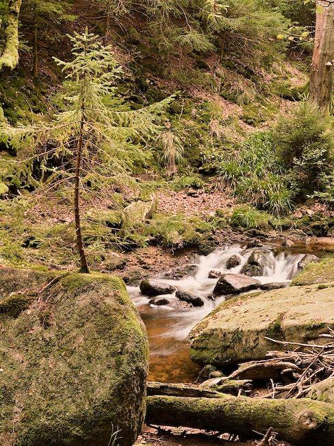 Erleben Sie die Natur bei Bad Harzburg