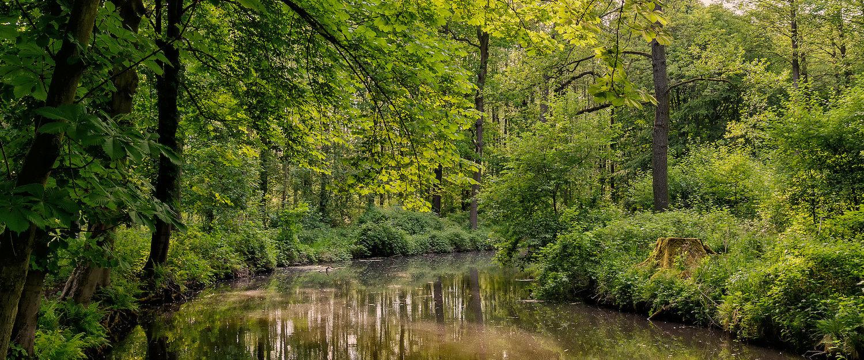 Landschaft um Wendisch Rietz