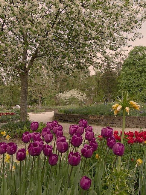 Der Kurpark von Bad Zwischenahn