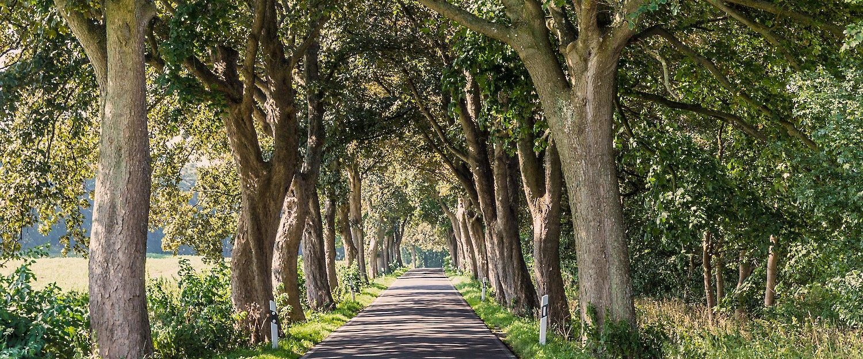 Von Bäumen gesäumten Straße