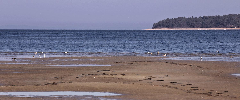 Strand mit Möven an der Ostsee