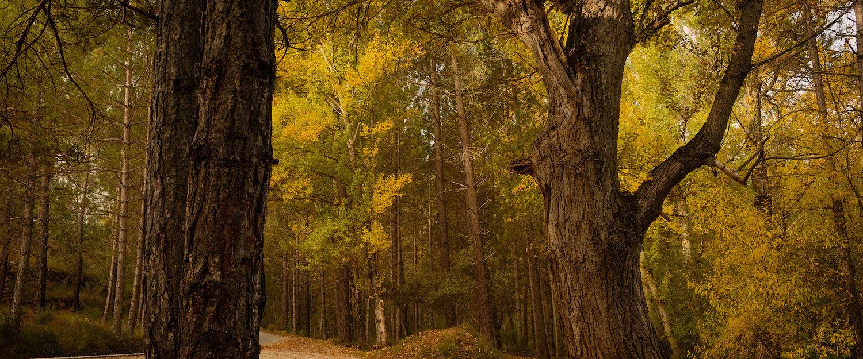 Bosque de Elche de la Sierra