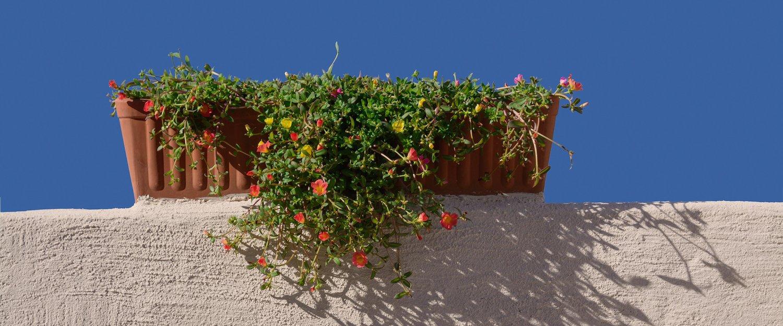 Bunte Blumen in Calvia.