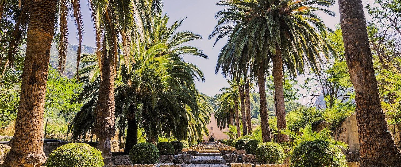 Palmbomen zorgen voor een zekere eilandflair