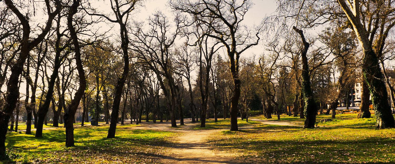El bosque en los alrededores de Vilaboa