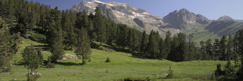 Valle en el Pirineo Aragones