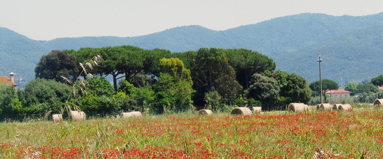 Ferienwohnungen und Ferienhäuser in Castagneto Carducci