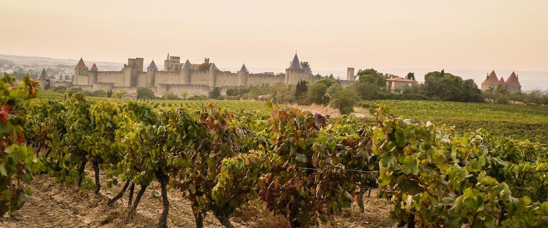 Vignes de Carcassonne