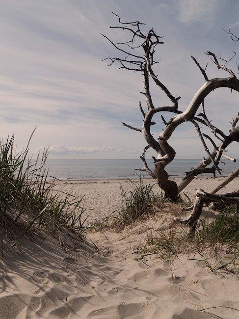Drijfhout op het strand
