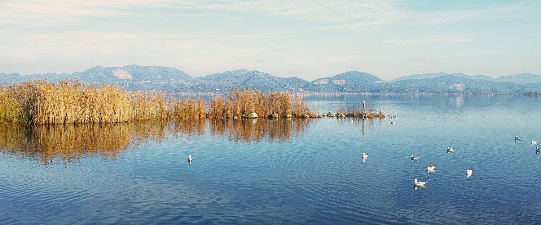Schilfmeer mit Blick auf die Berge