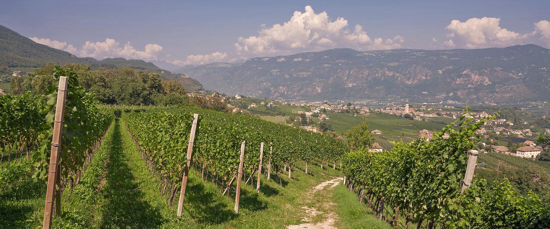 Weinanbau in Eppan