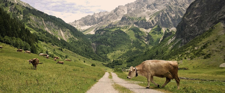 Auch für Wanderer ist Mittelberg ein Paradies