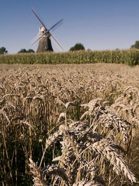Eine der Windmühlen auf Föhr.