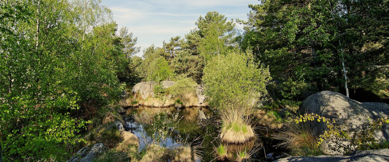 """Teich im """"Wald von Fontainebleau"""""""