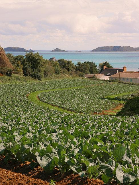Plantations et vue sur mer Paimpol