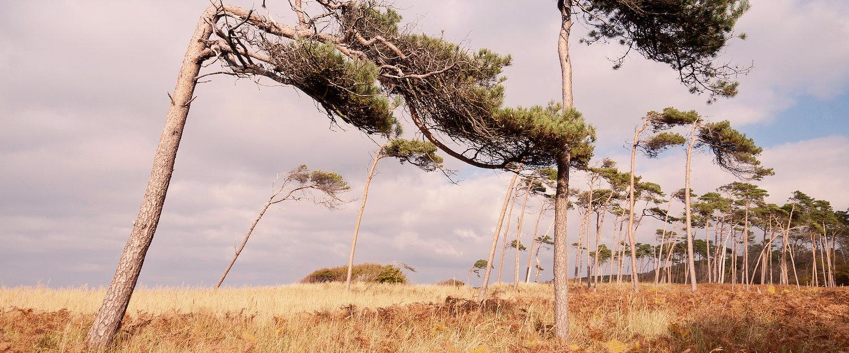 Landschaft der Halbinsel Fischland-Darßt-Zingst