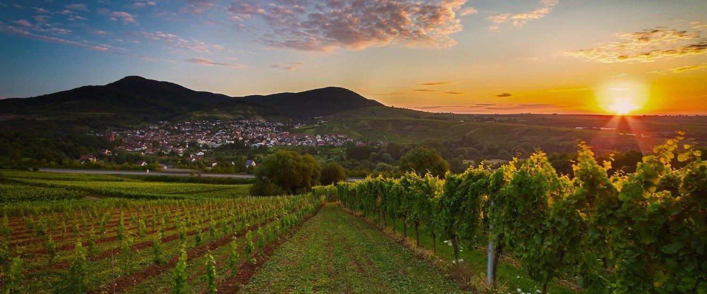 Ferienwohnungen und Ferienhäuser in der Pfalz