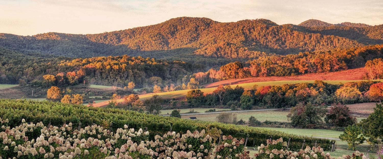 Weinberge und Blumen im Sonnenuntergang in Virginia