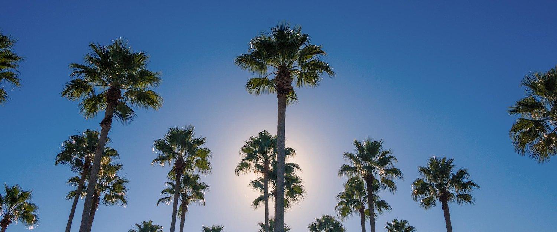 Blauwe lucht en palmbomen, een typisch beeld in Orlando