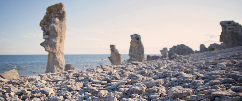 Rauker i naturreservatet Langhammars på Fårö nord for Gotland
