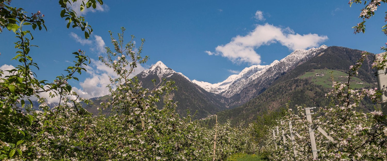 Bergpanorama Schenna