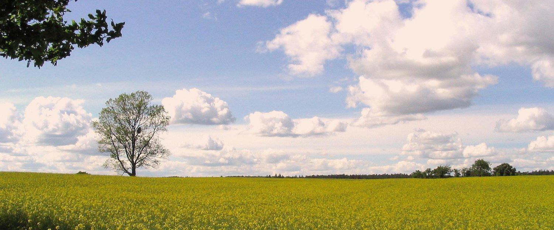 Een veld in het Uckermark