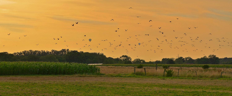 Acker im Sonnenuntergang im Münsterland