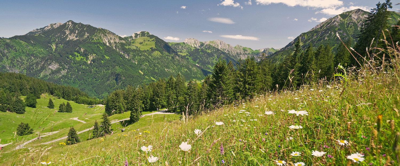 Blumenwiese in der Allgäuer Alpenlandschaft