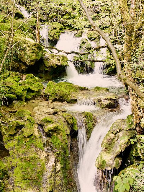 Forêt en Navarre