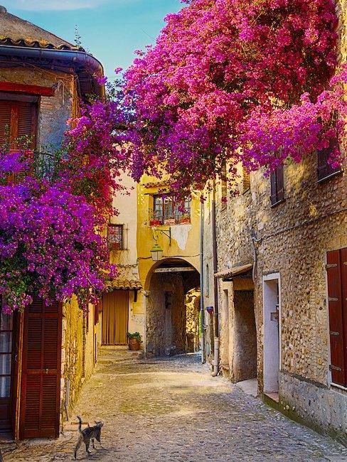 In der Provence liegt der Duft von Blüten und Kräutern in der Luft
