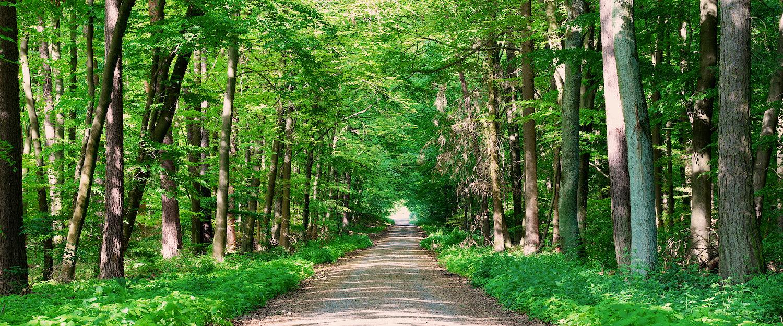 Grüner Odenwald im Sommer