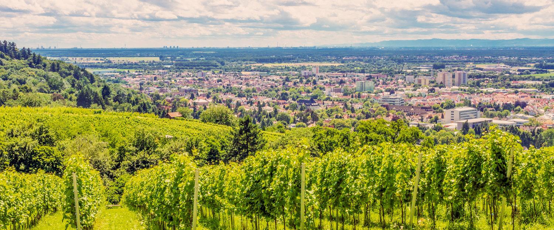 Blick auf die Weinberge vor Bensheim