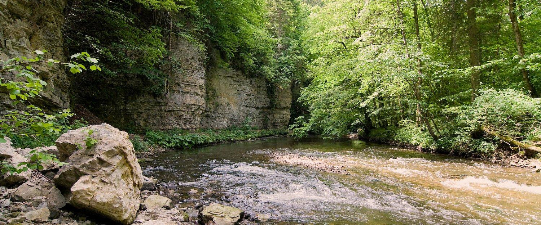 Unberührte Natur im Schwarzwald