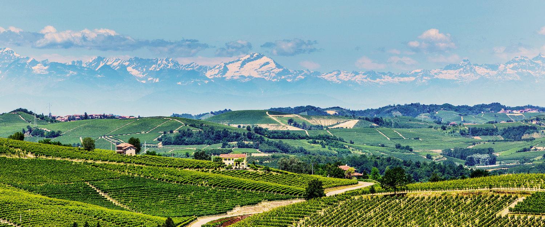 Vitigni e montagne sullo sfondo.